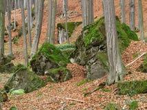 Stenen in het hout Stock Foto's