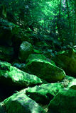 Stenen in het meest forrest van Moravië in Tsjechische republiek Stock Afbeelding