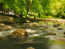 Stenen in hout bosstroom in het park van Gdansk oliva Stock Foto