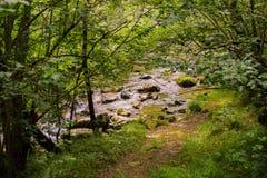 Stenen in Majaceite-rivier in Gr Bosque, Spanje stock foto's