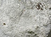 Stenen med brun mossa specificerade textur, bakgrund fotografering för bildbyråer