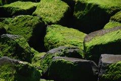 Stenen met algen Stock Afbeelding