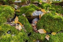 Stenen met groen mos en met sommige droge bladeren in de lente worden behandeld die Natuurlijke achtergrond Stock Afbeeldingen