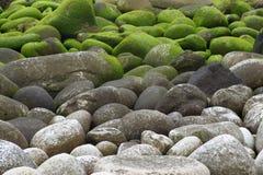 Stenen met mos Stock Afbeelding