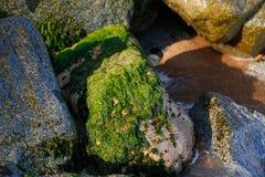 Stenen met mos in de branding royalty-vrije stock fotografie