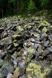 Stenen met mos en korstmos worden behandeld dat stock foto's