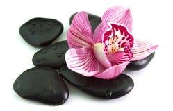Stenen met orchideebloem Stock Afbeeldingen