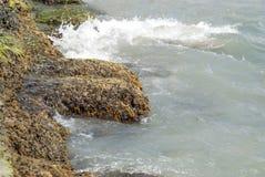 Stenen met zeewier op de overzeese kust worden behandeld die Royalty-vrije Stock Afbeelding