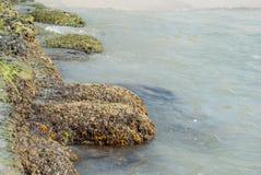 Stenen met zeewier op de overzeese kust worden behandeld die Stock Afbeeldingen