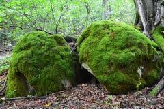 Stenen in mos Stock Afbeelding