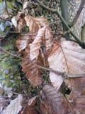 Stenen, mos, bladeren Stock Afbeelding