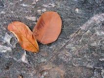 Stenen och dog blad Arkivfoto