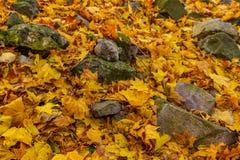 Stenen onder de herfstbladeren Stock Foto's