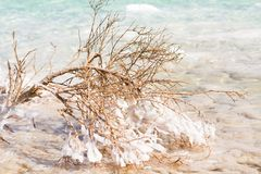 Stenen op de bank van het Dode Overzees Royalty-vrije Stock Fotografie