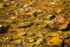 Stenen op een bodem van een kreek royalty-vrije stock afbeelding