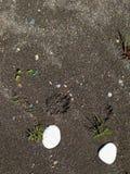 Stenen op een nat zand Stock Afbeeldingen