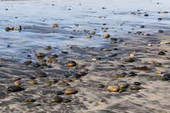 Stenen op het Strand dat van de Staat van Cardiff worden verspreid stock foto's
