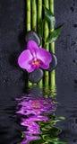 Stenen, orchideebloem en bamboe in een water worden weerspiegeld dat royalty-vrije stock afbeeldingen