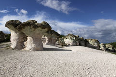 Stenen plocka svamp naturligt fenomen arkivfoto