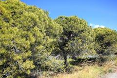 Stenen sörjer träd Royaltyfria Bilder