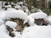 Stenen täckte med grön mossa och vit snö och sörjer trädet i skogen i Altai, Ryssland fotografering för bildbyråer