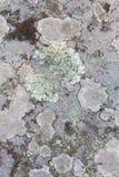 Stenen texturerar Royaltyfri Foto