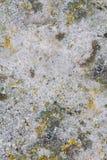 Stenen texturerar Arkivfoton