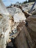 Stenen vaggar strandDriftwwood detaljer, träd somfilialen rotar Royaltyfria Bilder