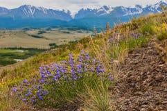 Stenen van bergen de blauwe bloemen Royalty-vrije Stock Afbeeldingen