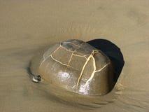 Stenen verkar ryggskölden av en sköldpadda Arkivbild
