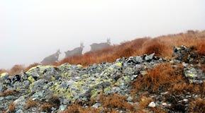 Stenget på den dimmiga dagen Arkivbilder