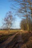Stenig bana längs skogen Royaltyfri Fotografi
