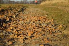 Stenig bana längs skogen Royaltyfri Foto