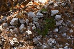 Stenig bana mellan träd i Kroatien royaltyfria foton