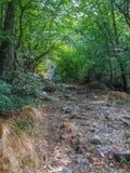 stenig bergväg Arkivfoton