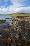 Stenig fjordkust-linje Orkney Skottland Fotografering för Bildbyråer