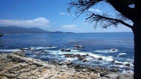 Stenig havkustlinje med ett träd Royaltyfri Fotografi