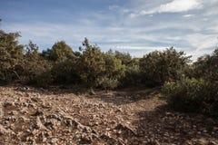 Stenig jordning med gröna buskar Arkivbilder