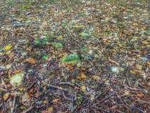 Stenig jordning med täckt mossa vaggar i Oklahoma arkivfoton