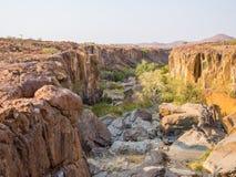 Stenig kanjon med gröna buskar och träd i det Palmwag medgivandet, Namibia, sydliga Afrika Arkivbilder