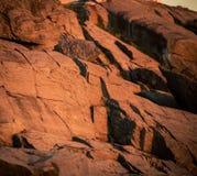 Stenig kust av Nova Scotia Arkivbild