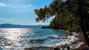 Stenig kust nära en skog Royaltyfri Bild