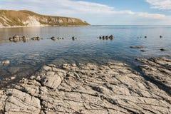 Stenig kust på den Kaikoura halvön Arkivbild