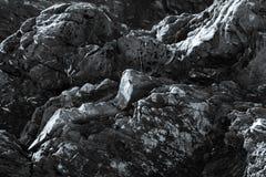Stenig kustlinje i svartvitt royaltyfri foto