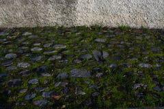 Stenig mossig trottoar Royaltyfri Bild