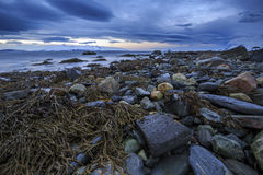 Stenig shoreline med havsväxt Royaltyfria Bilder