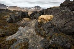 Stenig shoreline med havsväxter Arkivfoto