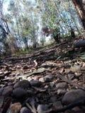 stenig skog royaltyfri bild