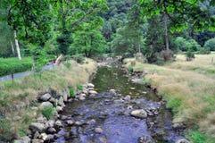 Stenig ström i skog Arkivbild