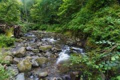Stenig ström i skogsmark Arkivfoton
